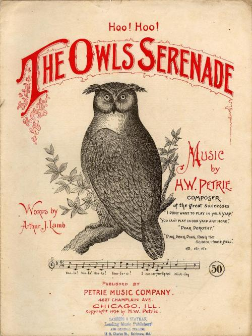 Hoo! Hoo! The Owls Serenade