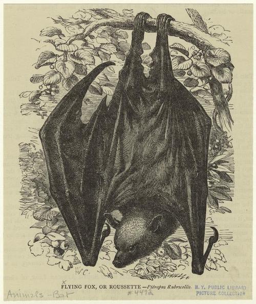 The Flying Fox