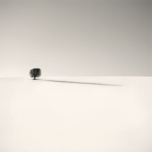 Snowy landscape with lone tree