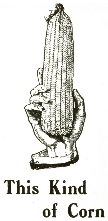 This kind ofcorn