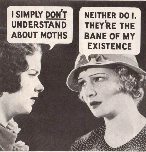 moths understand