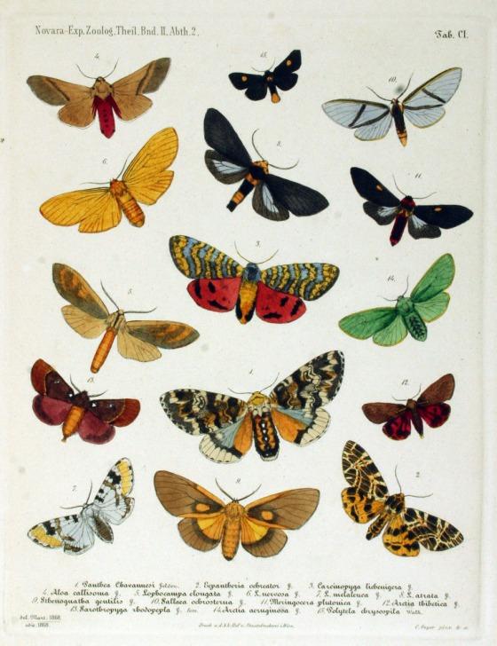 moths22
