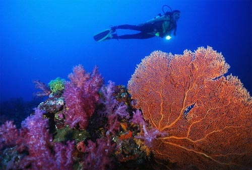Diving at a coralreef