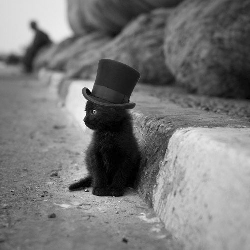 Kittens Wearing Top Hats Kitten Wearing a Top Hat