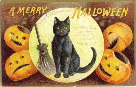 black cat halloween8970