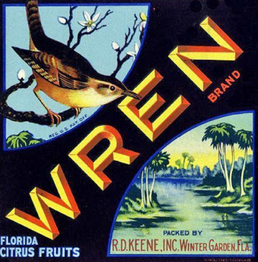 Wren Citrus Fruits