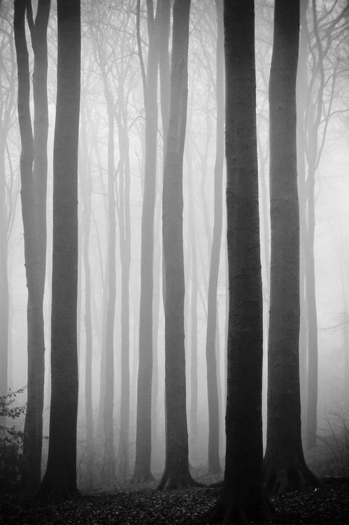 Dark and FoggyForest