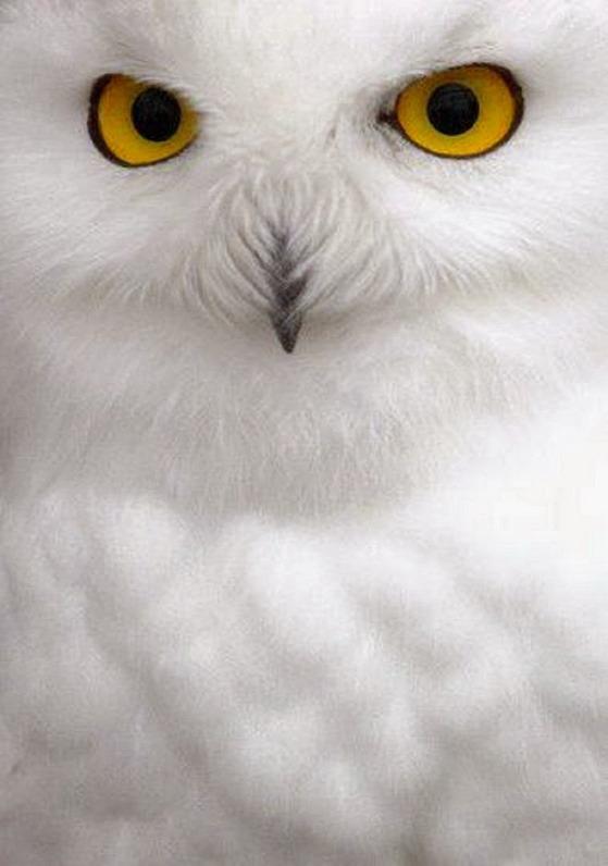 owl 133