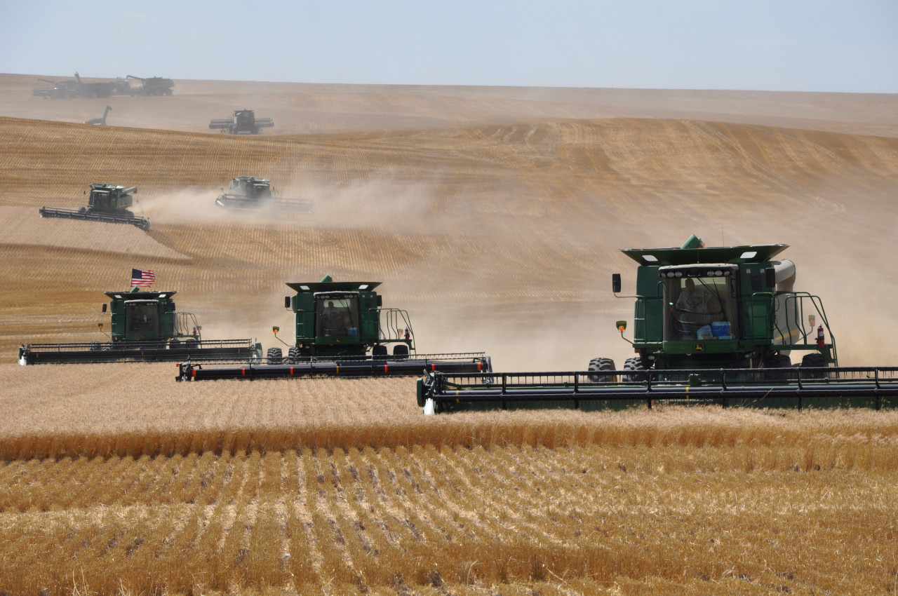 Industrial wheat harvest