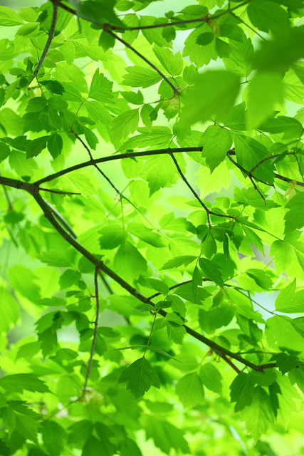 Green: Leaves