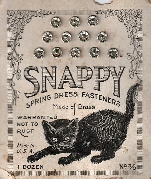 kitty snappy