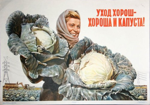 Good care means good cabbages, Soviet Union, 1956