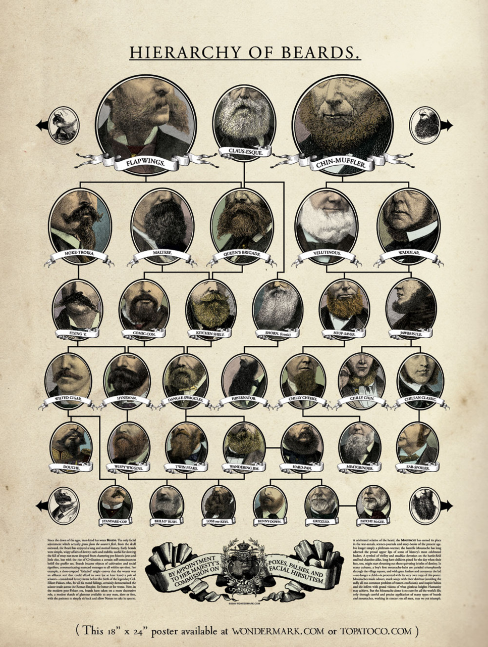 The Hierarchy ofBeards