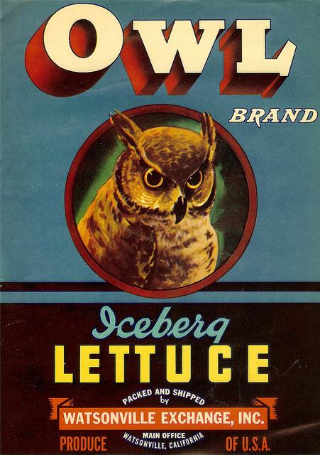 Owl Lettuce
