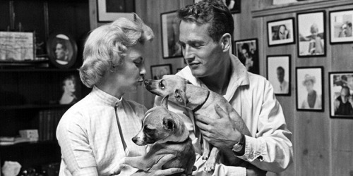 Paul Newman and Joanne Woodward with puppies