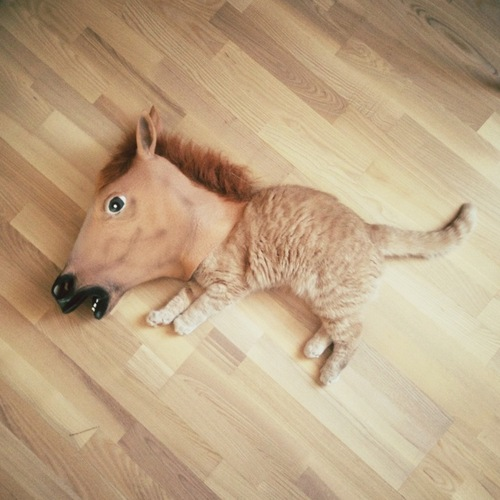 Cat with a horse'shead