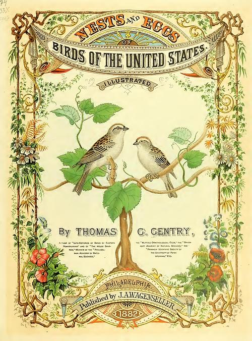 Nests and Eggs of Birds of the United States,1882
