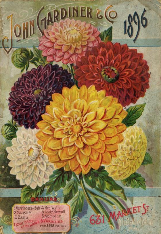 flower seed catalog 17608