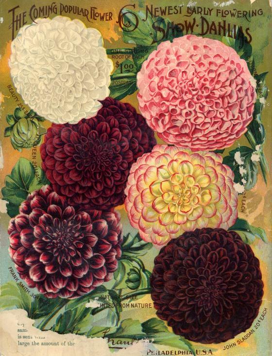 flower seed catalog 17609