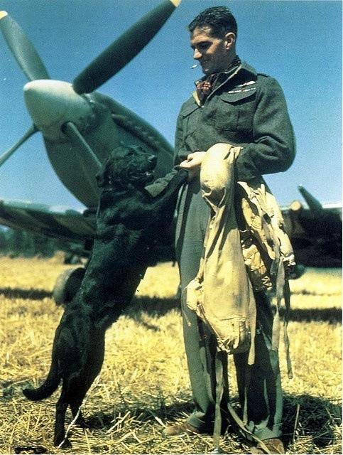WWII RAF Pilot,UK