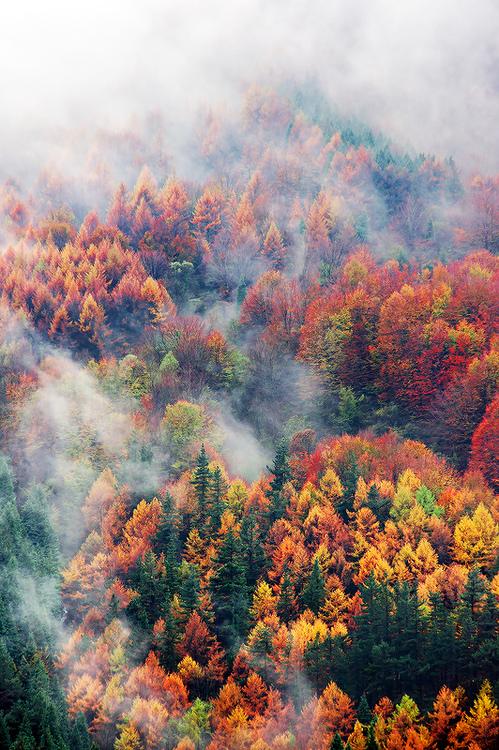 Foliage and Fog