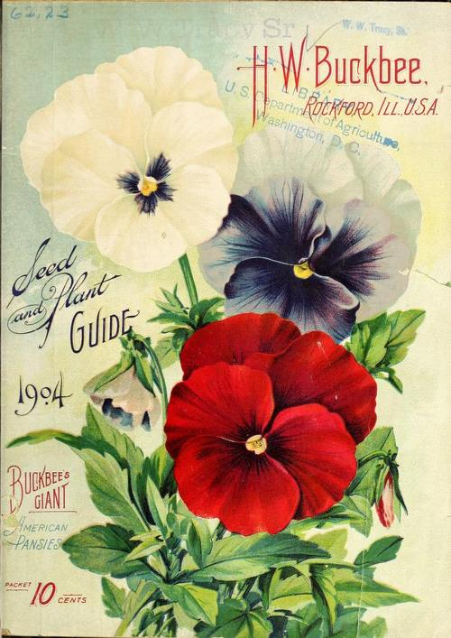 Pansies on the cover of an old seed catalog,1904