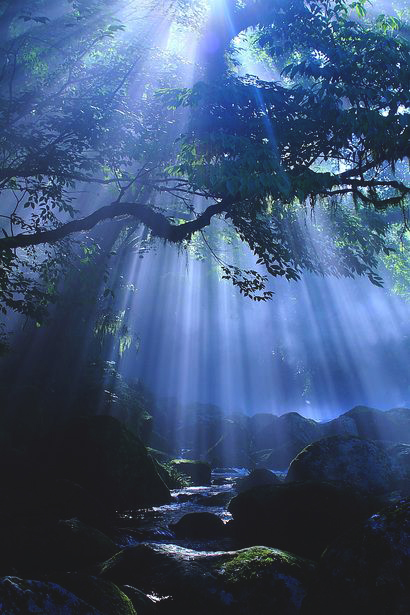 Sunlight through the forest canopy andmist
