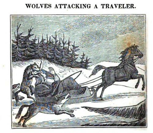 Wolves attacking atraveler