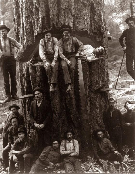 lumberjacks 1281