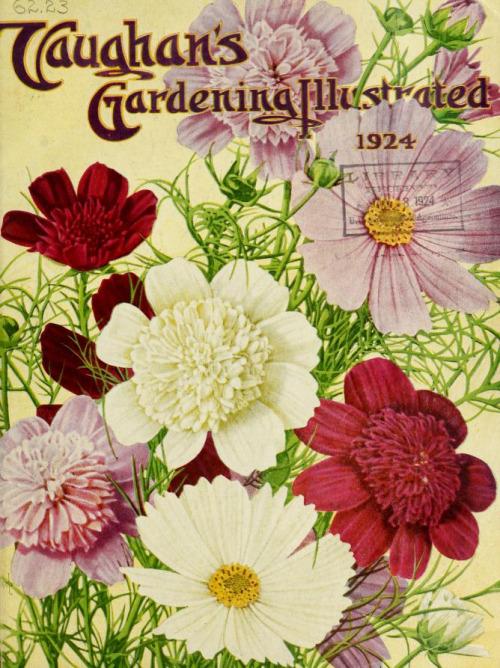 vintage seed catalogs 500
