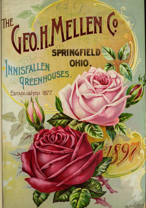 vintage seed catalogs 502