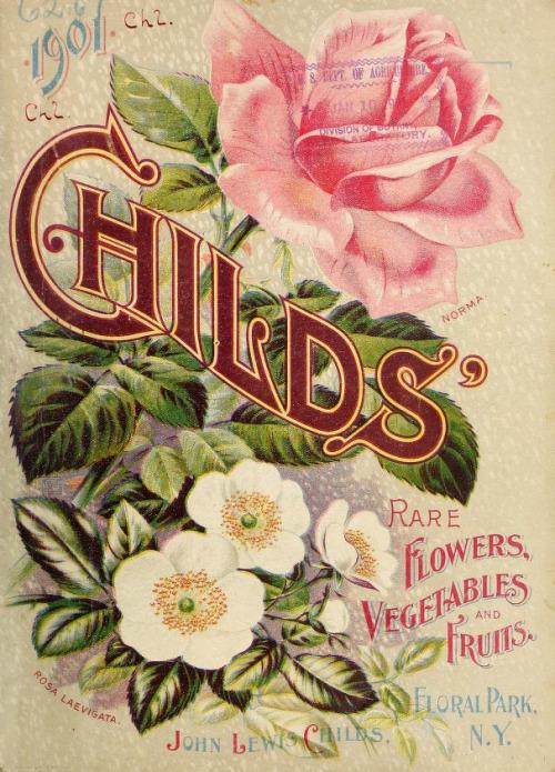 vintage seed catalogs 503