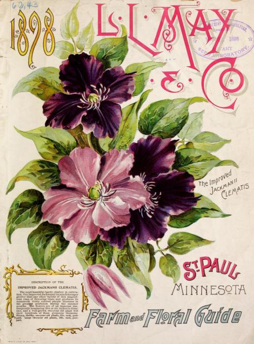 vintage seed catalogs 504