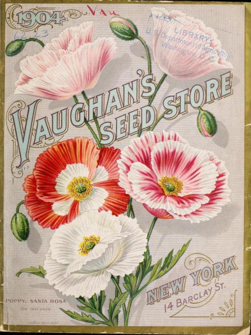 vintage seed catalogs 505