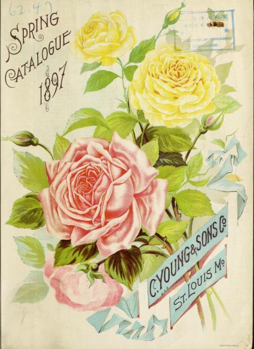 vintage seed catalogs 506