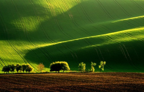 Wheat field in Spring,Tuscany