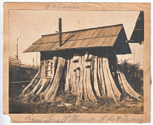 Lumberjack house in a giant cedar tree stump (18 feet across)