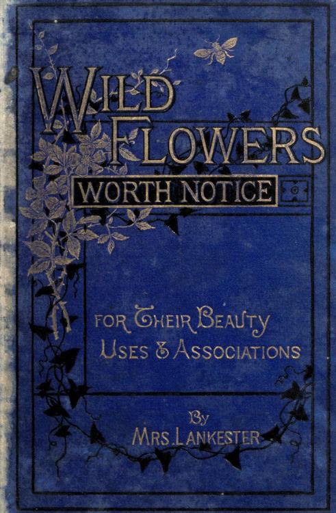 wild flowers worth