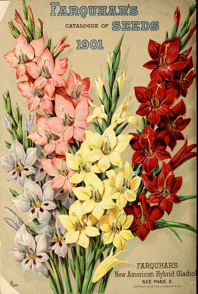 Gladioli on the cover of Farquhar's Seed Catalogue, 1901
