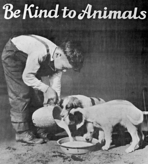 be kind to animals002