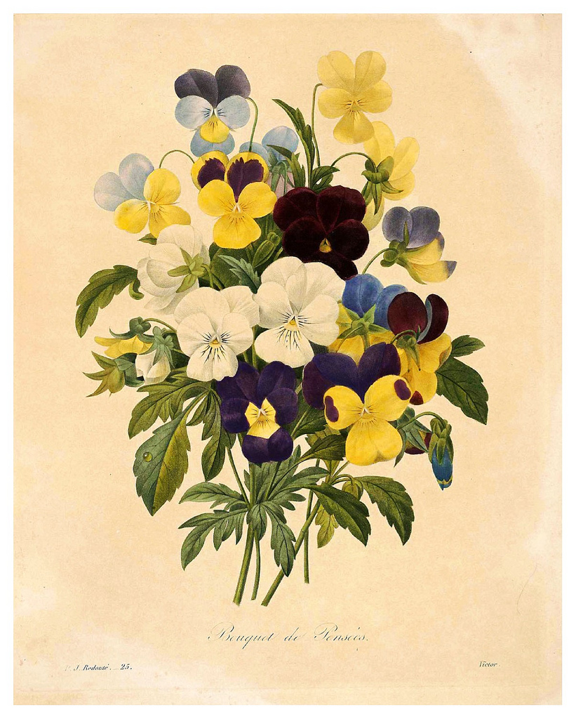 Pansies (actually they look more like Violas, Pansy's little brother)