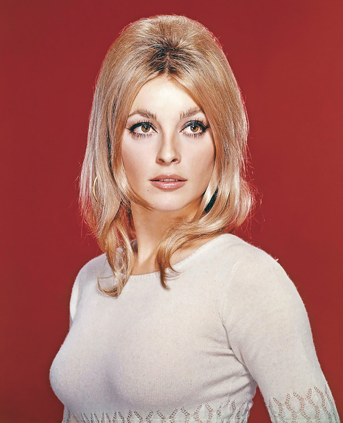 sharon tate 1224