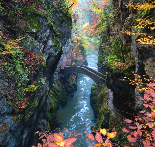 autumn bridge 33