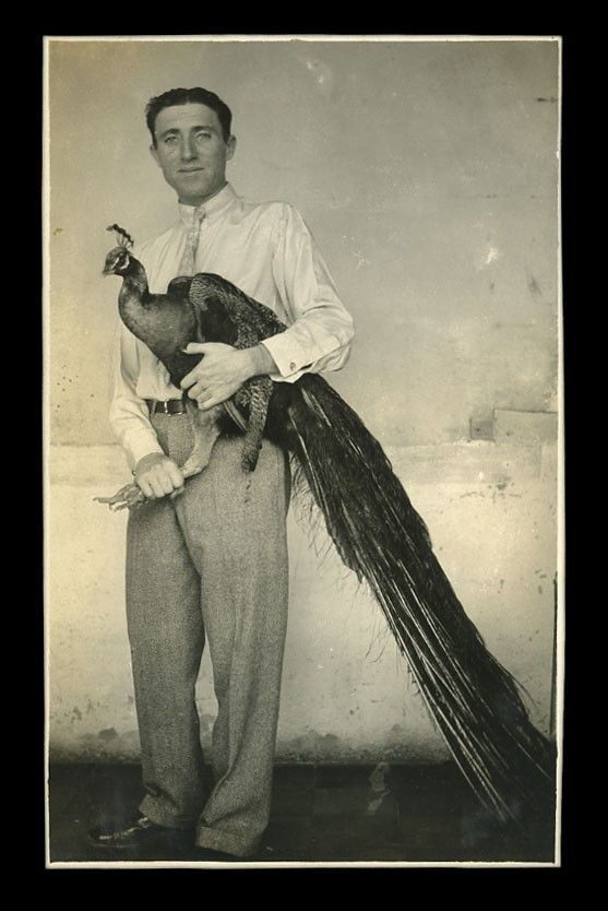 peacock and man