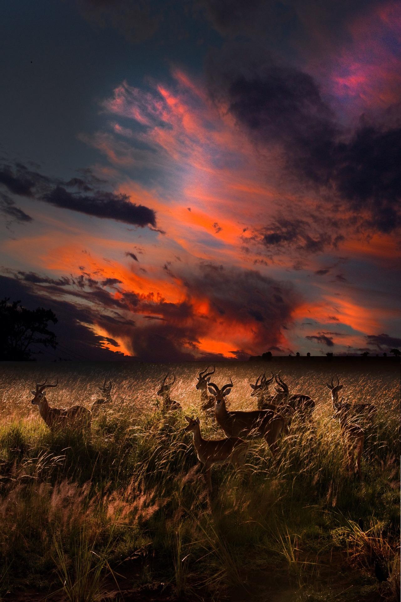 Gazelles by DavidHobcote
