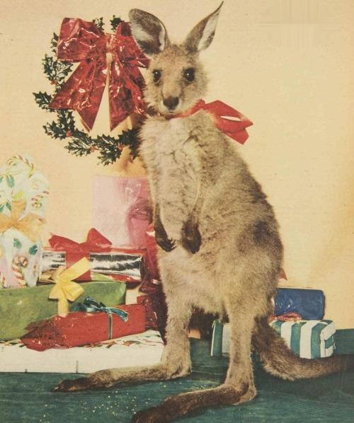 Merry Australian Christmas
