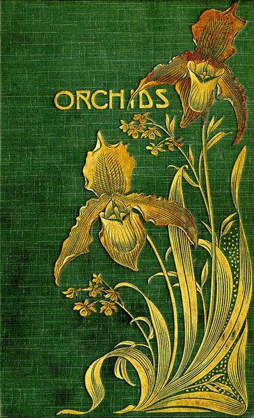 orchids 0