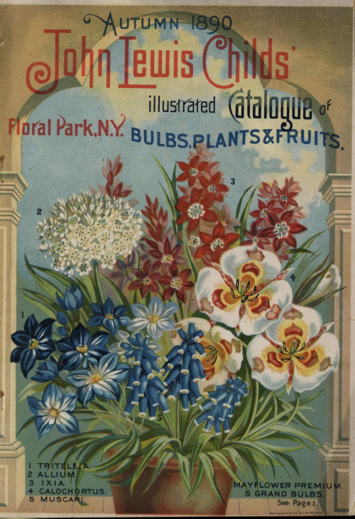 seed catalogs 5009