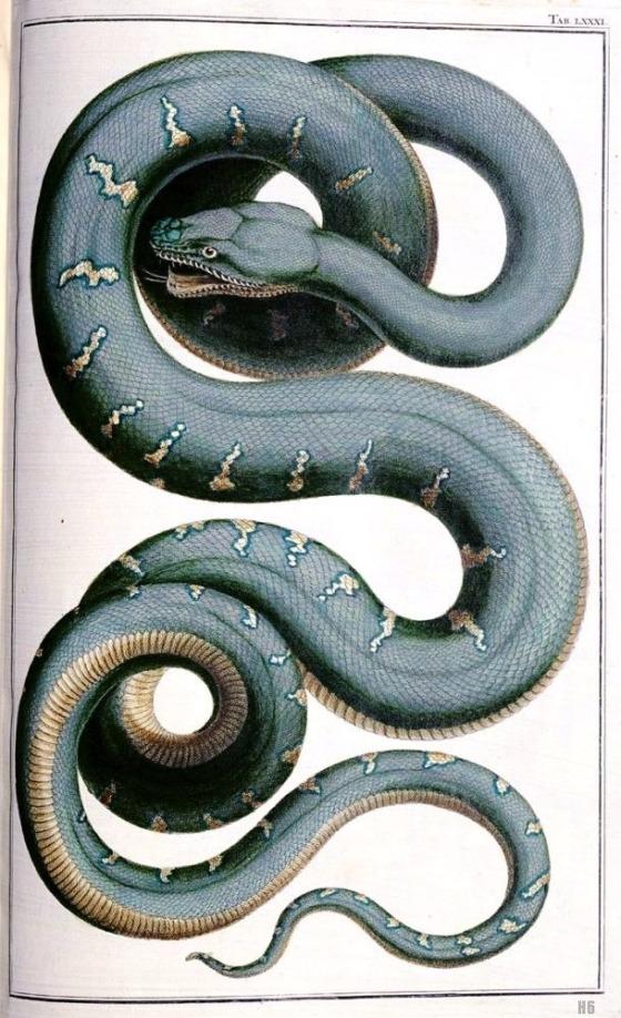 snake 422