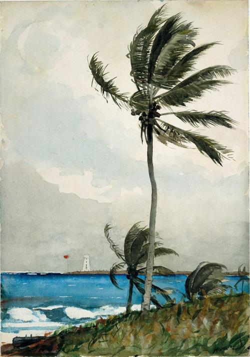 tropical 501